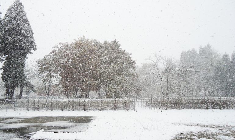 冬の便り ~初雪の秋田~