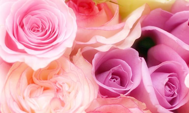色や本数によって違う薔薇の花言葉