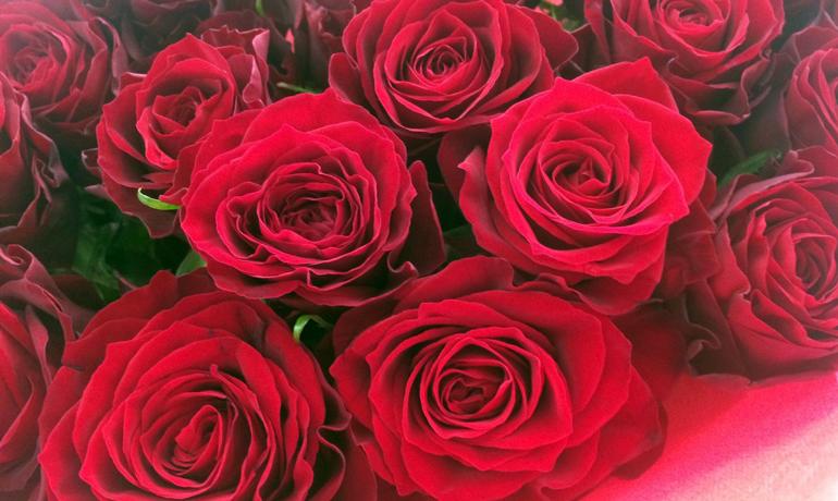 美しい薔薇にはトゲがある