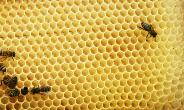 建築にも使われるミツバチの巣の構造