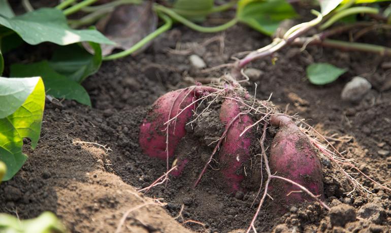 有機栽培と無農薬栽培の違いはなに?