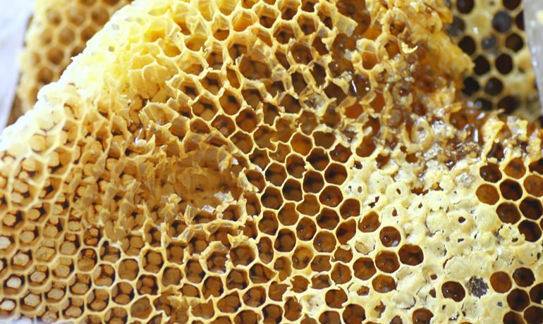 ミツバチの巣は何でできているの?
