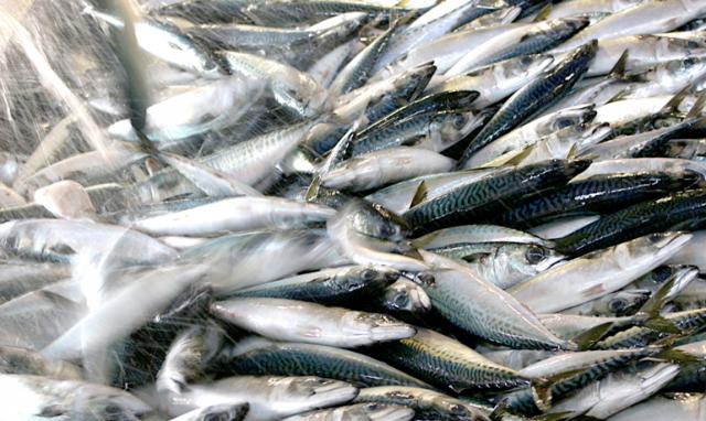 寄生虫による食中毒予防
