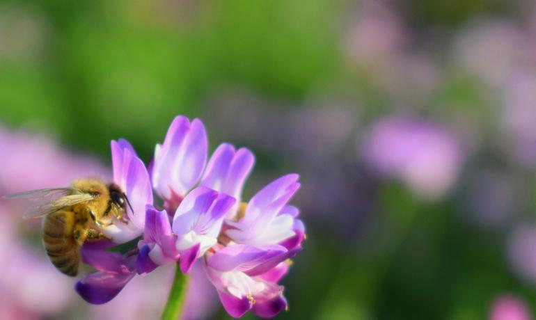 蜂蜜はどのように作られる?