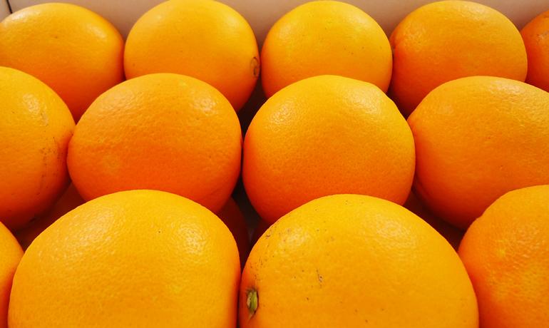 冬が旬の国産ネーブルオレンジ