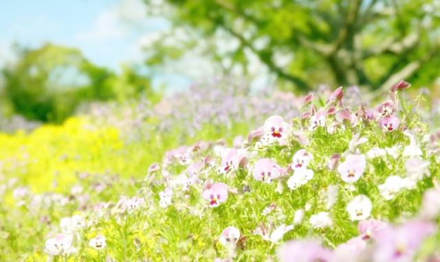 色々な花の蜜を味わえる「百花蜜」