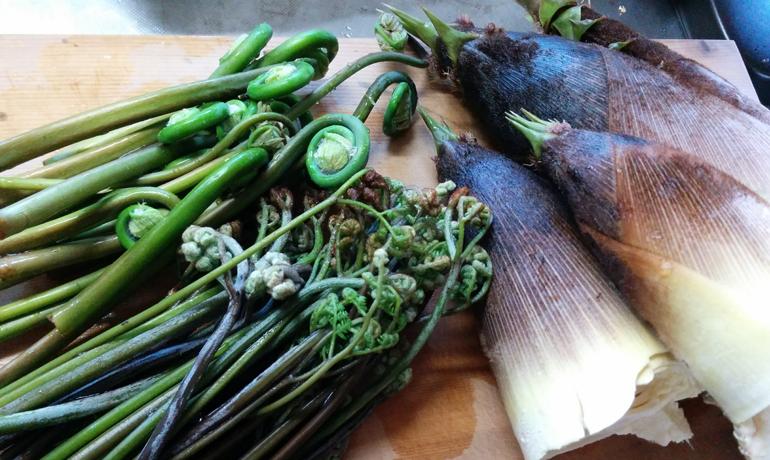山菜のアク抜きはどうして必要?
