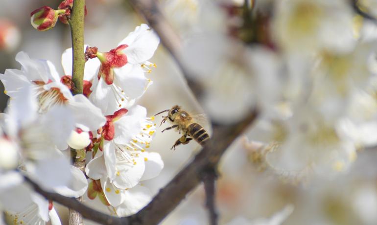 春のミツバチたち