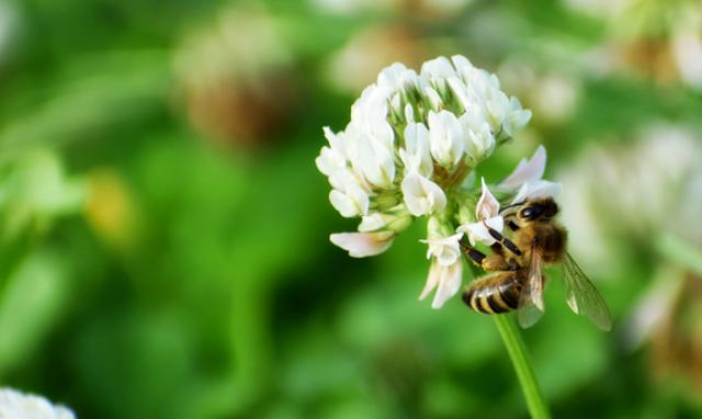 新女王蜂の誕生する季節