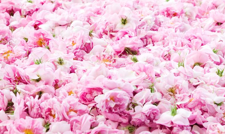 摘みたてならではの香り。ローズウォーター(薔薇水)でリラックスタイム♪