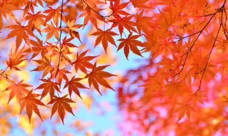 秋田県の紅葉ランキング2018