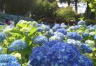 紫陽花が美しい秋田の絶景スポット