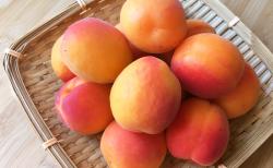 初夏の果実の代表・栄養豊富なあんずのジャム