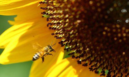 暑さを乗り切るミツバチたちの驚きの知恵!