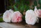 秋の夜長…バラの香りでリラックス