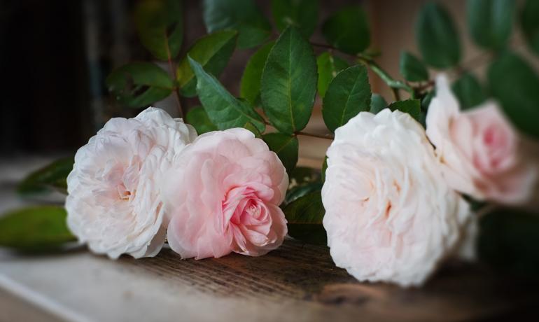 薔薇の花びらをキレイに保存する方法