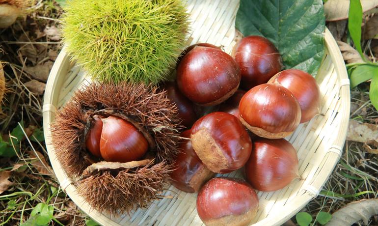ジャムも美味しい秋の実り「栗」の栄養