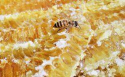 ツタンカーメンも愛したハチミツの歴史