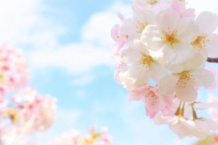 秋田県・桜の名所